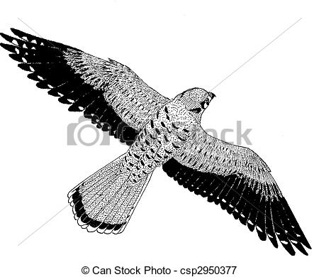 Sparrowhawk clipart #14, Download drawings