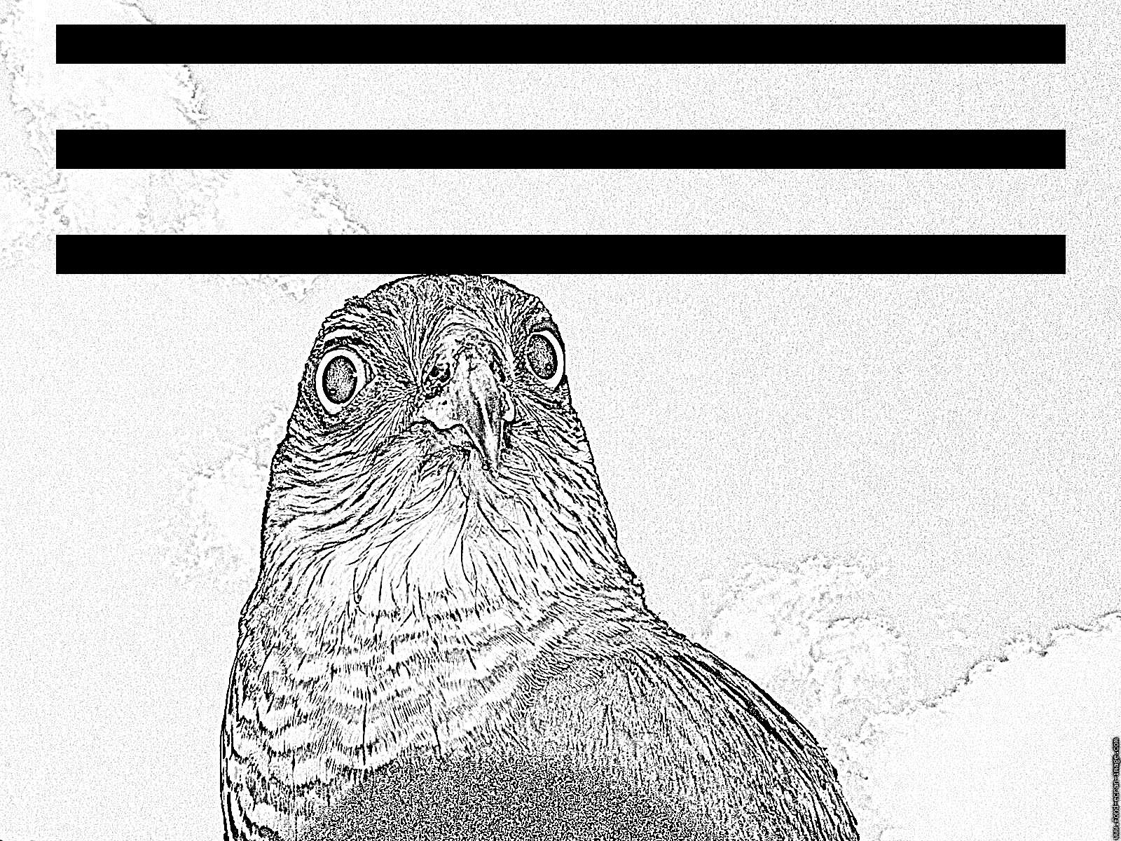 Sparrowhawk coloring #4, Download drawings