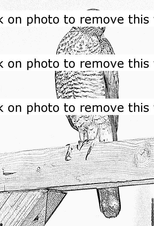 Sparrowhawk coloring #10, Download drawings