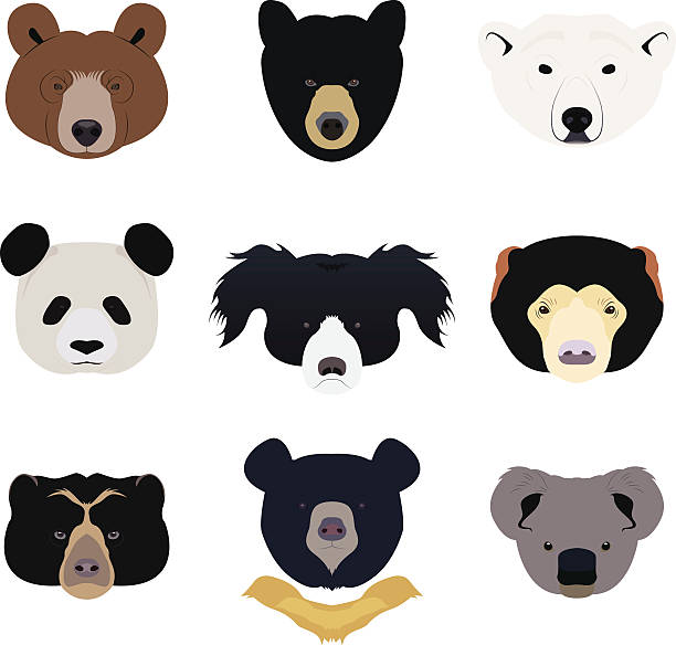 Sun Bear clipart #12, Download drawings