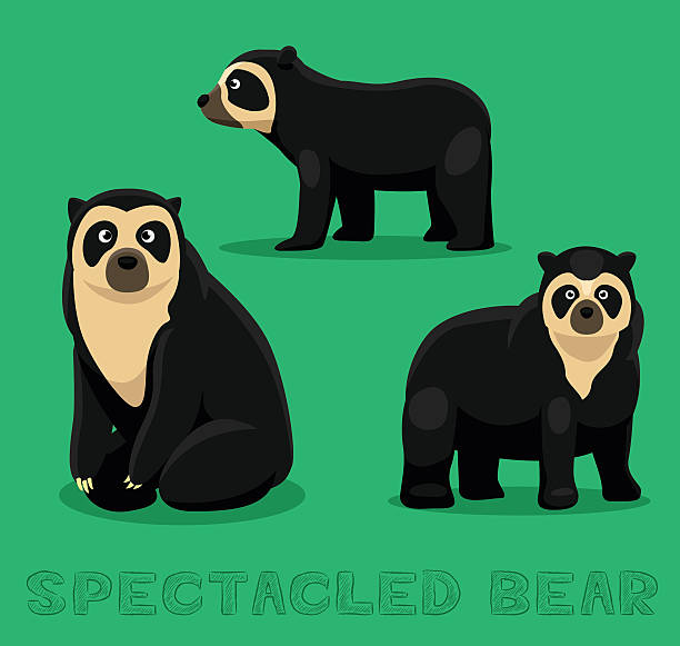 Spectacled Bear clipart #5, Download drawings