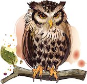 Spectacled Owl clipart #4, Download drawings