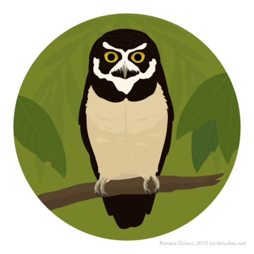 Spectacled Owl clipart #10, Download drawings