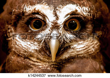 Spectacled Owl clipart #2, Download drawings