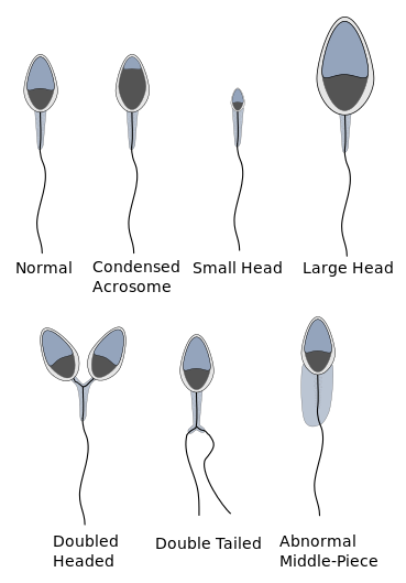 Sperm svg #12, Download drawings