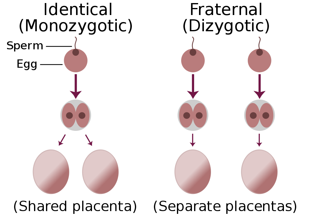 Sperm svg #11, Download drawings