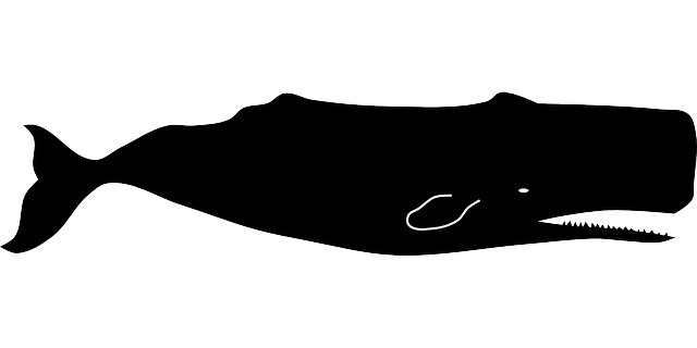 Sperm Whale clipart #12, Download drawings