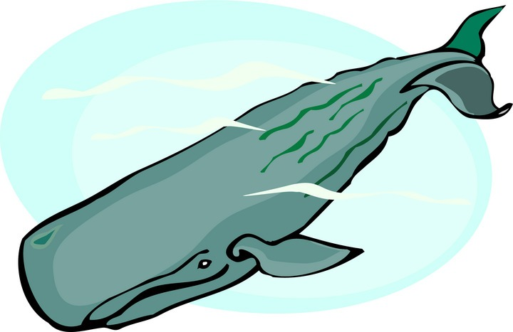Sperm Whale clipart #6, Download drawings