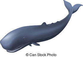Sperm Whale clipart #2, Download drawings