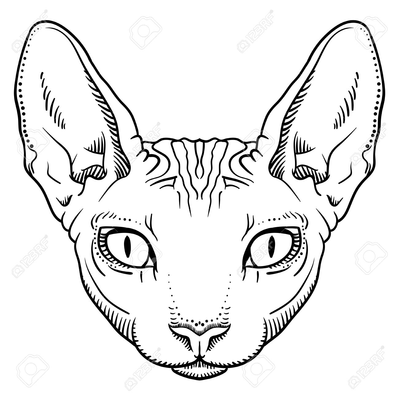 Sphynx Cat clipart #12, Download drawings