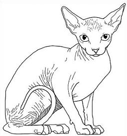 Sphynx clipart #9, Download drawings