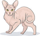 Sphynx Cat clipart #1, Download drawings