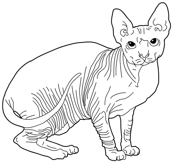 Sphynx Cat coloring #2, Download drawings