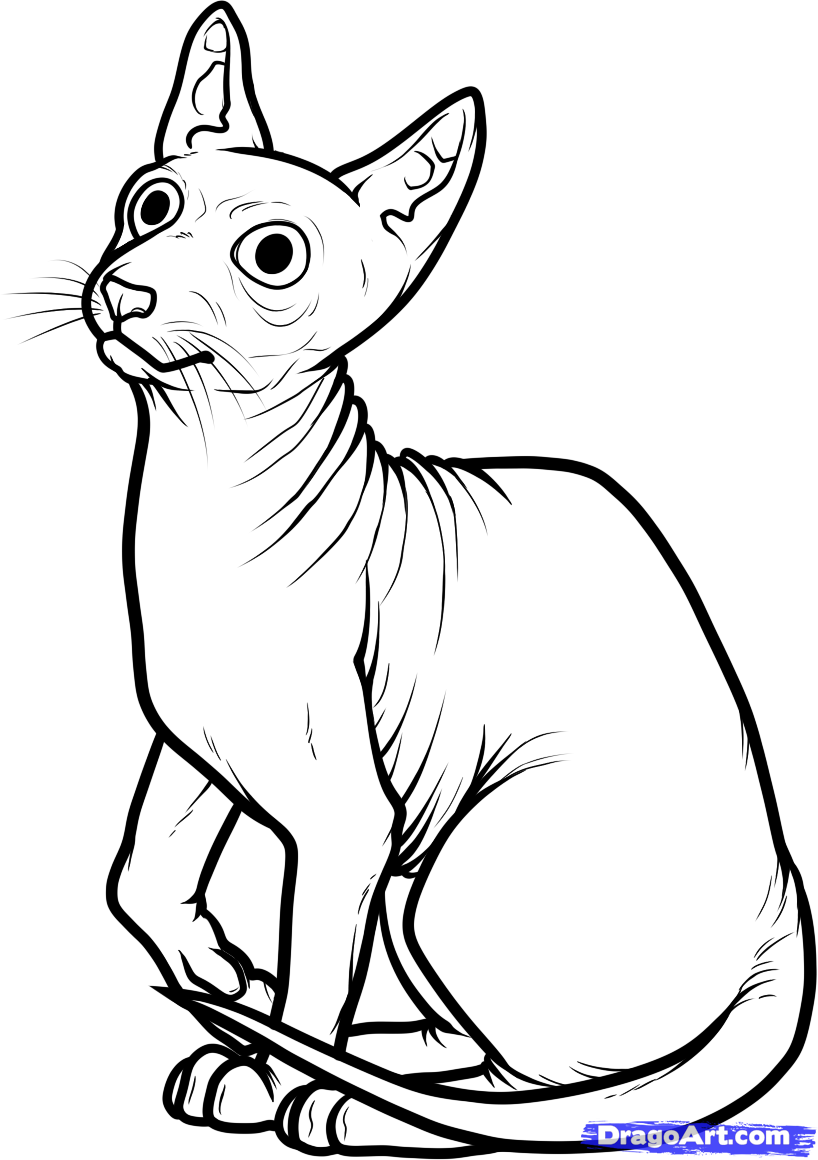 Sphynx Cat coloring #10, Download drawings
