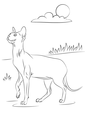 Sphynx Cat coloring #12, Download drawings