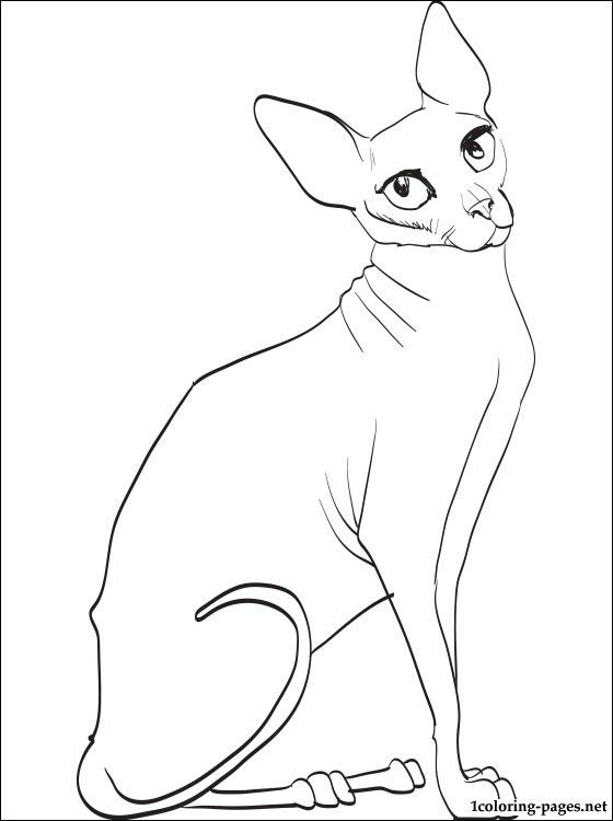Sphynx Cat coloring #13, Download drawings