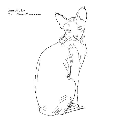 Sphynx Cat coloring #3, Download drawings