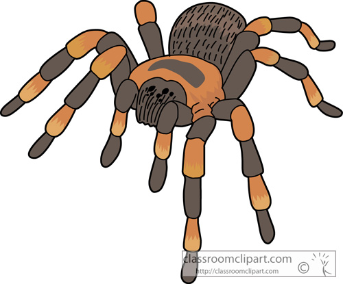 Spider clipart #13, Download drawings