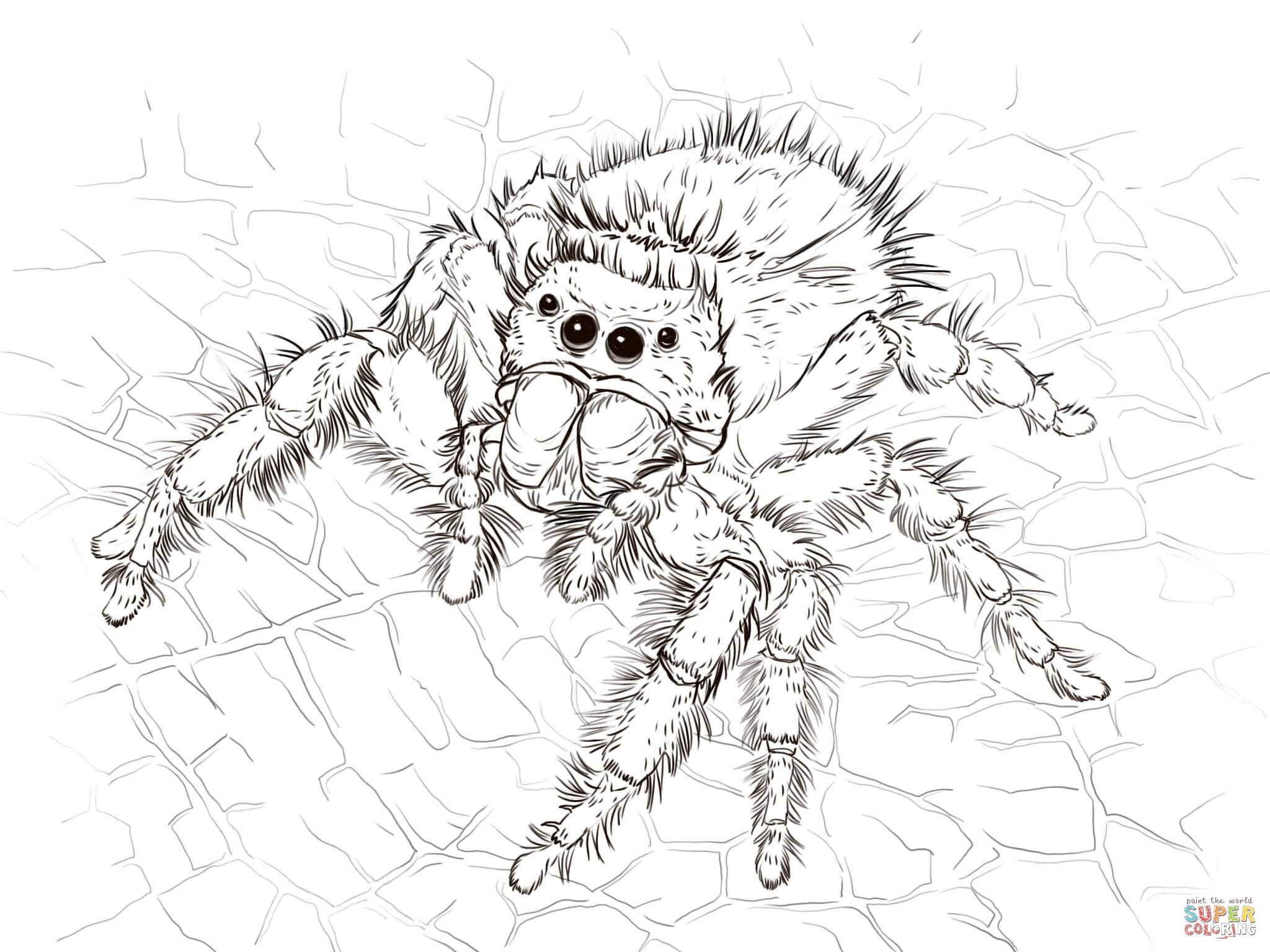 Jumping Spider coloring #17, Download drawings