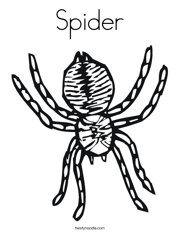 Wolf Spider coloring #8, Download drawings