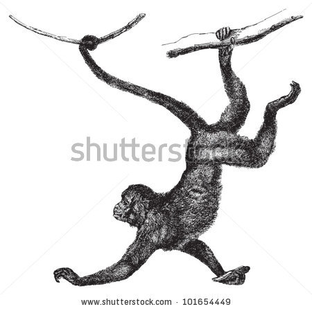 Spider Monkey clipart #13, Download drawings