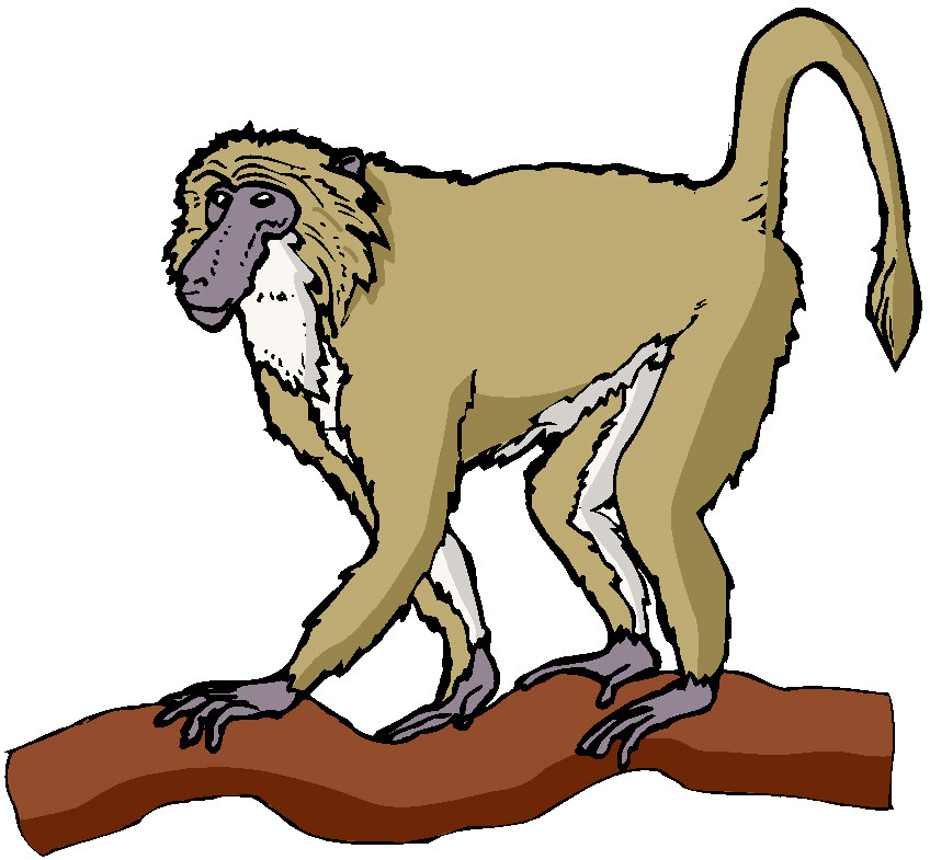 Spider Monkey clipart #6, Download drawings