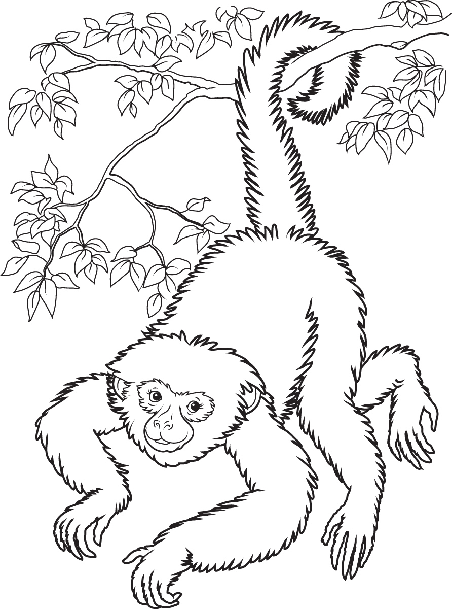 Spider Monkey clipart #11, Download drawings