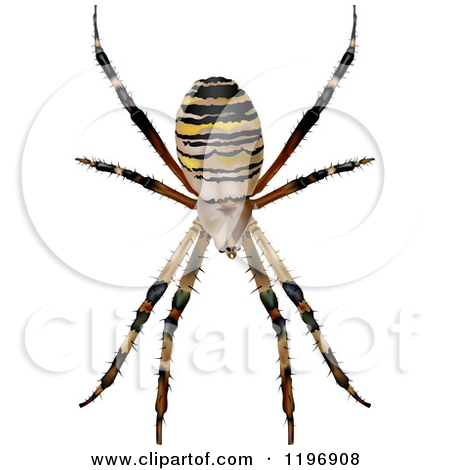 Spider Wasp clipart #18, Download drawings