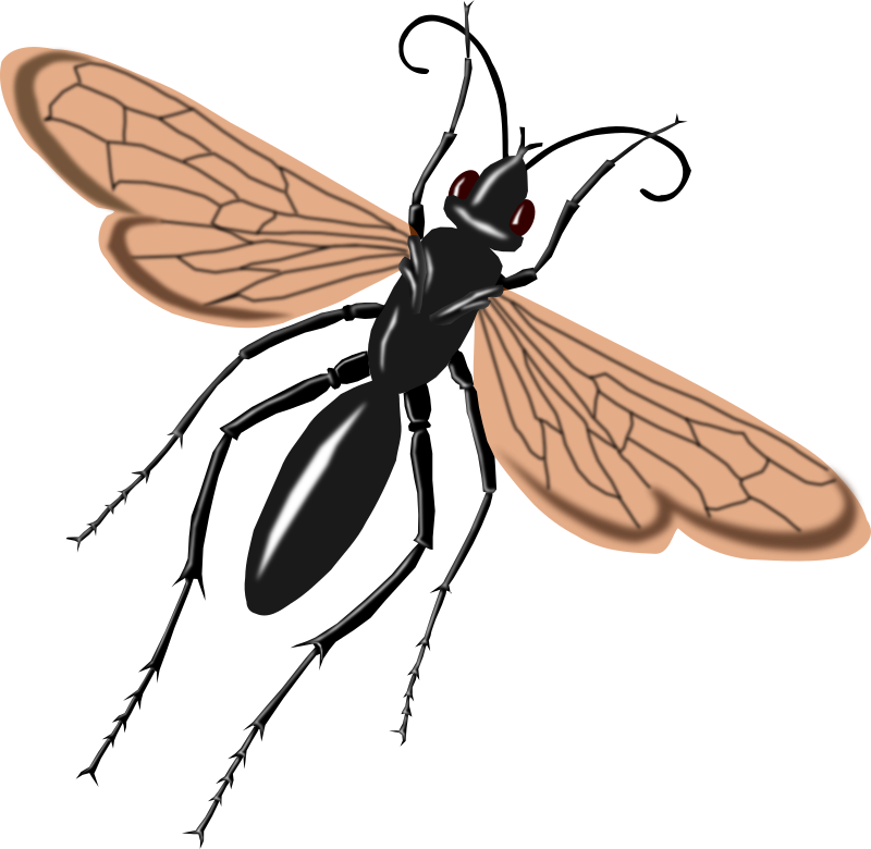 Spider Wasp clipart #9, Download drawings