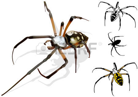 Spider Wasp clipart #13, Download drawings