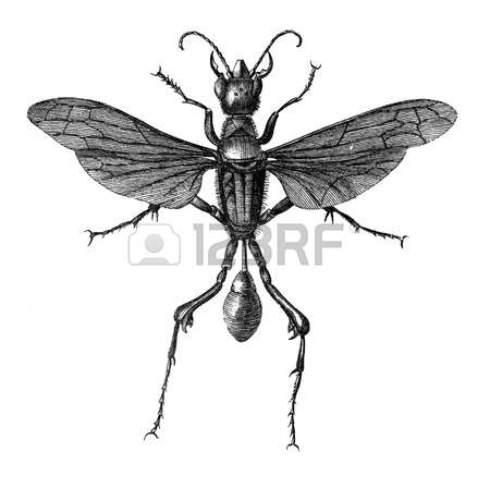 Spider Wasp clipart #5, Download drawings