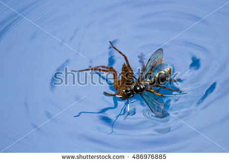 Spider Wasp clipart #4, Download drawings