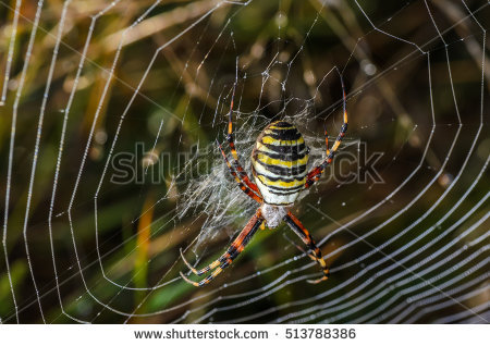 Spider Wasp clipart #2, Download drawings