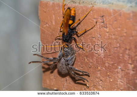 Spider Wasp clipart #3, Download drawings