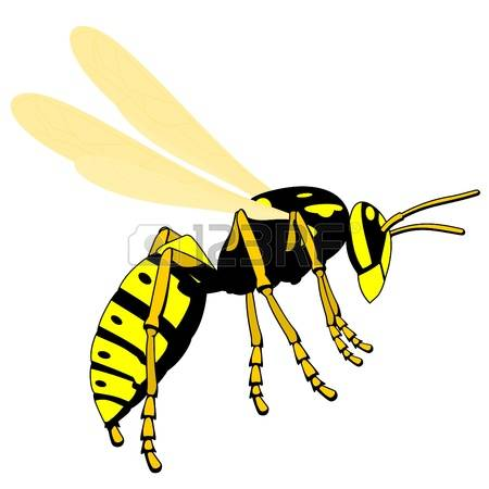 Wasp clipart #20, Download drawings