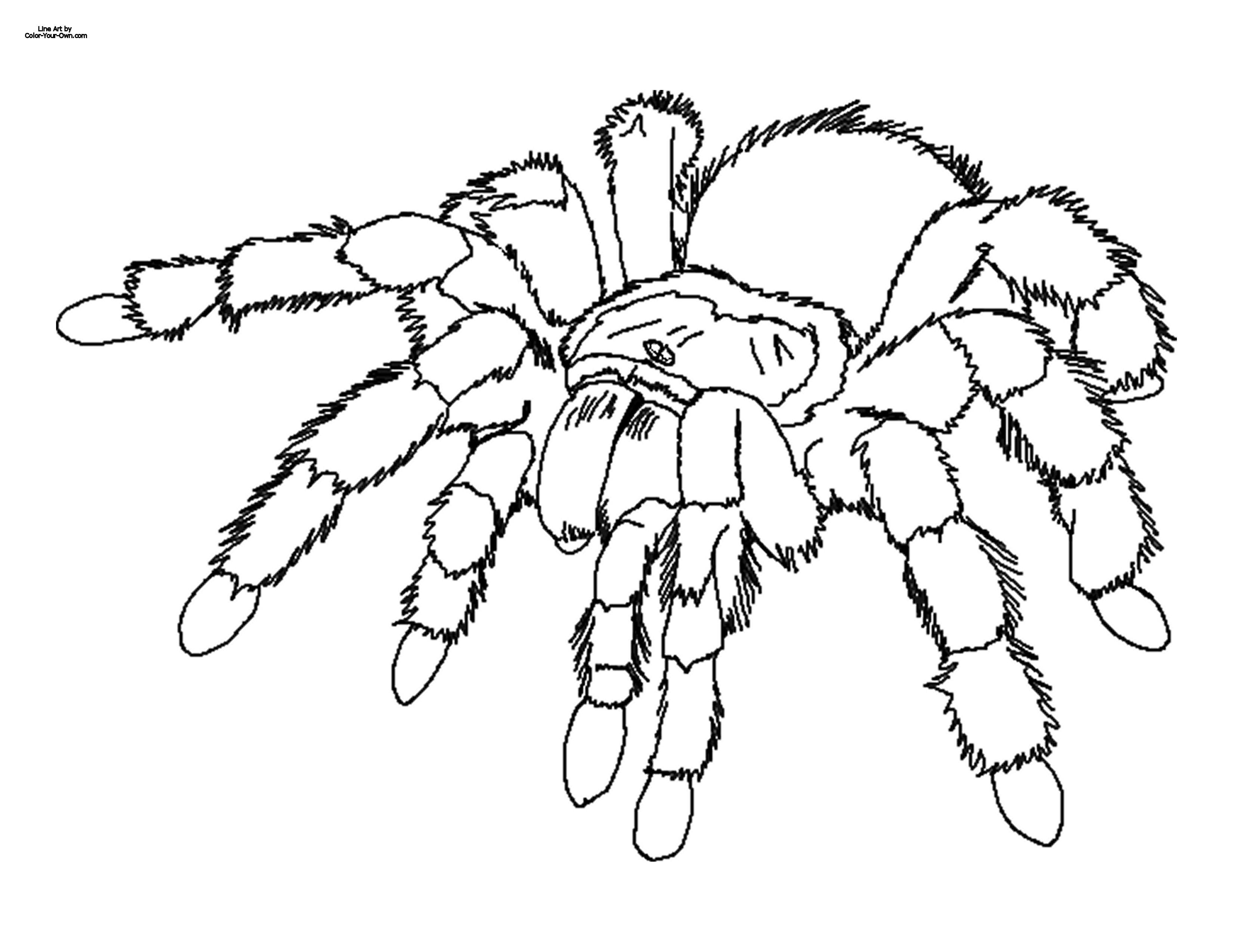 Tarantula coloring #19, Download drawings