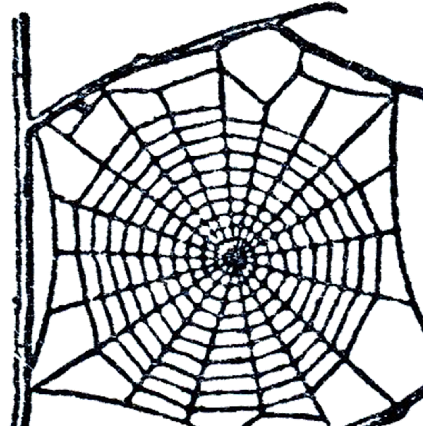 Spider Web clipart #14, Download drawings