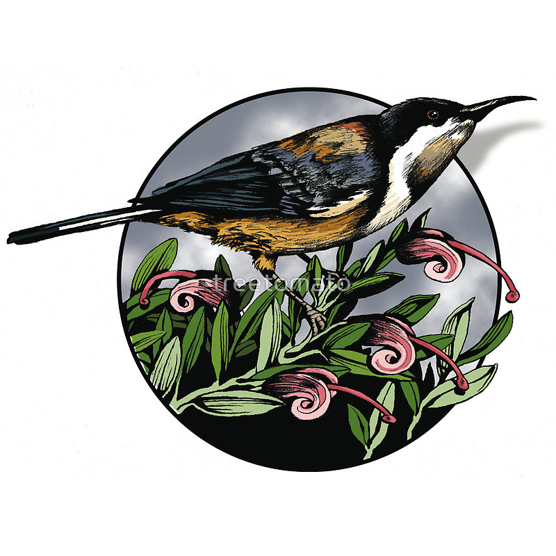 Spinebill clipart #5, Download drawings