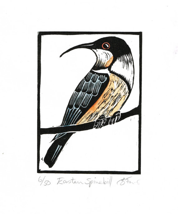 Spinebill clipart #4, Download drawings