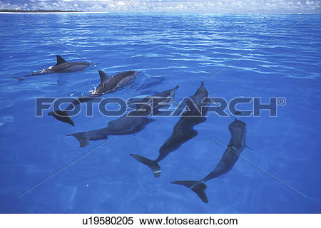 Spinner Dolphin clipart #14, Download drawings