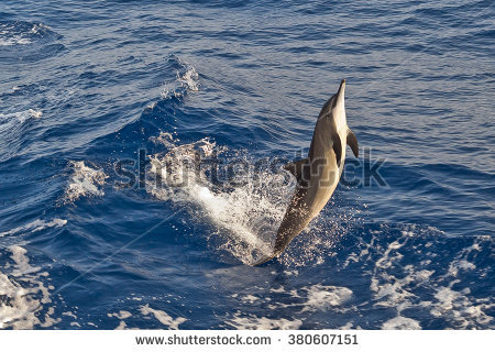 Spinner Dolphin clipart #6, Download drawings
