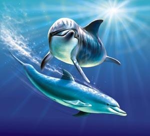 Spinner Dolphin clipart #3, Download drawings