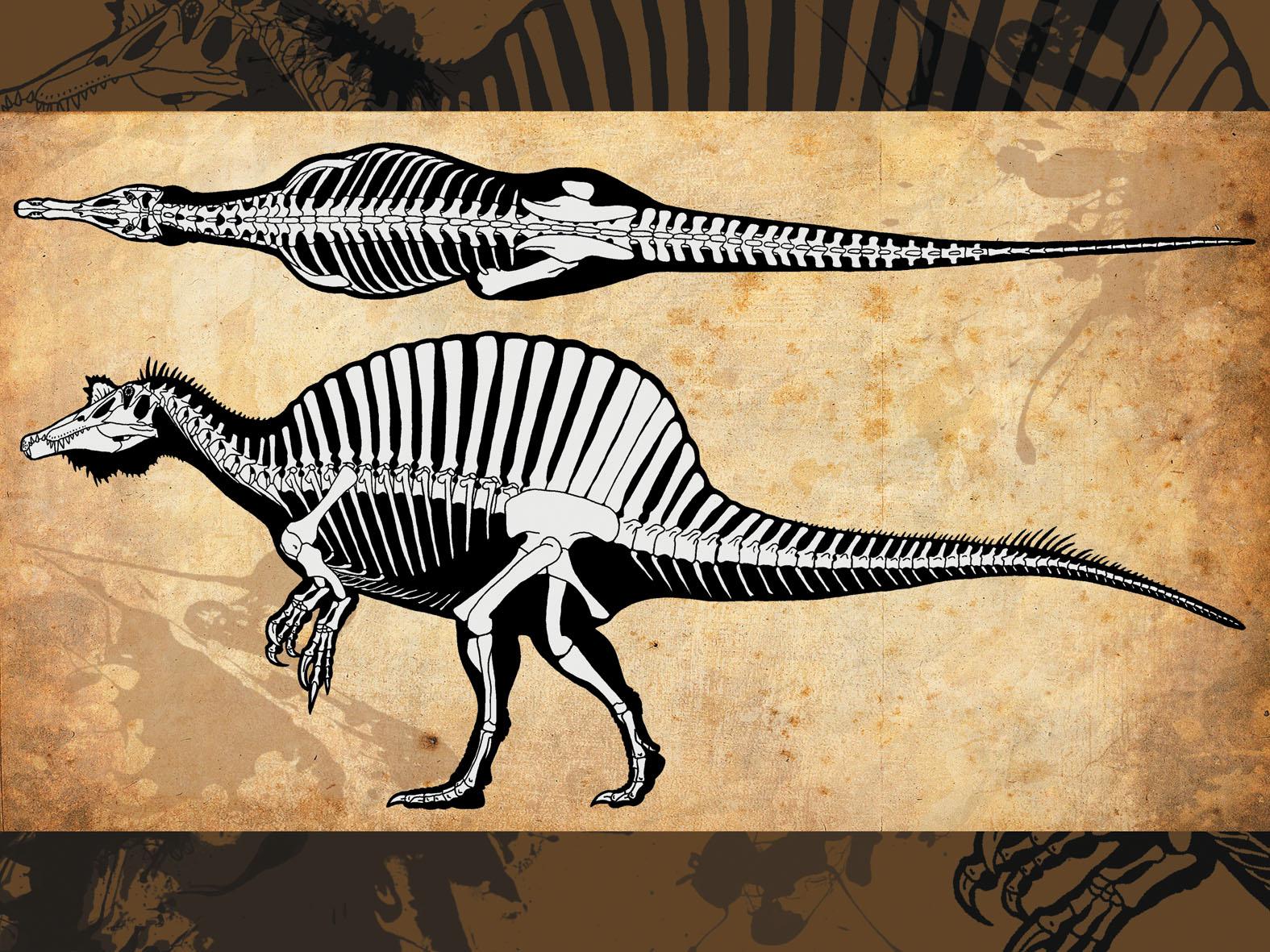 Spinosaurus svg #1, Download drawings