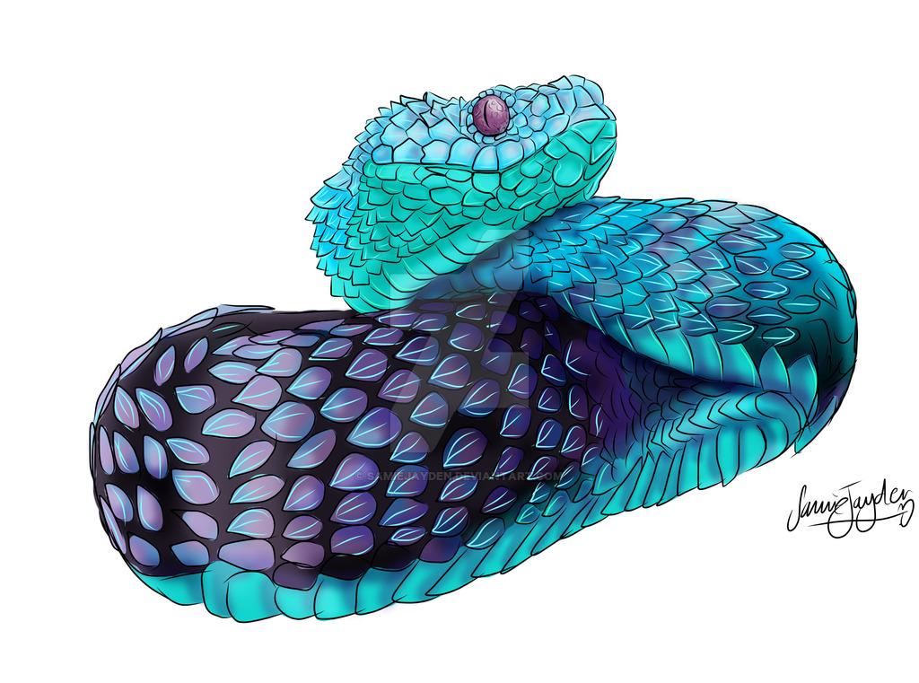 Spiny Bush Viper svg #15, Download drawings