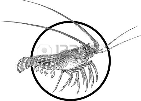 Spiny Lobster clipart #8, Download drawings