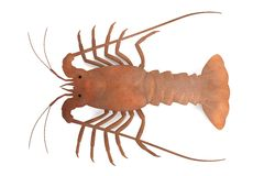 Spiny Lobster clipart #10, Download drawings