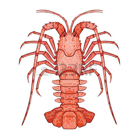 Spiny Lobster clipart #5, Download drawings