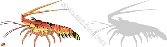 Spiny Lobster clipart #1, Download drawings