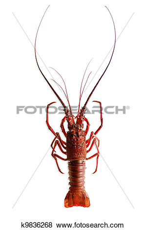 Spiny Lobster clipart #2, Download drawings