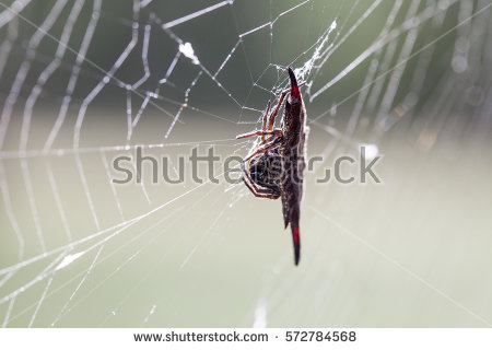 Spiny Orb Weaver clipart #3, Download drawings
